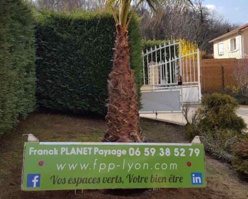 plantation-palmier-arbre